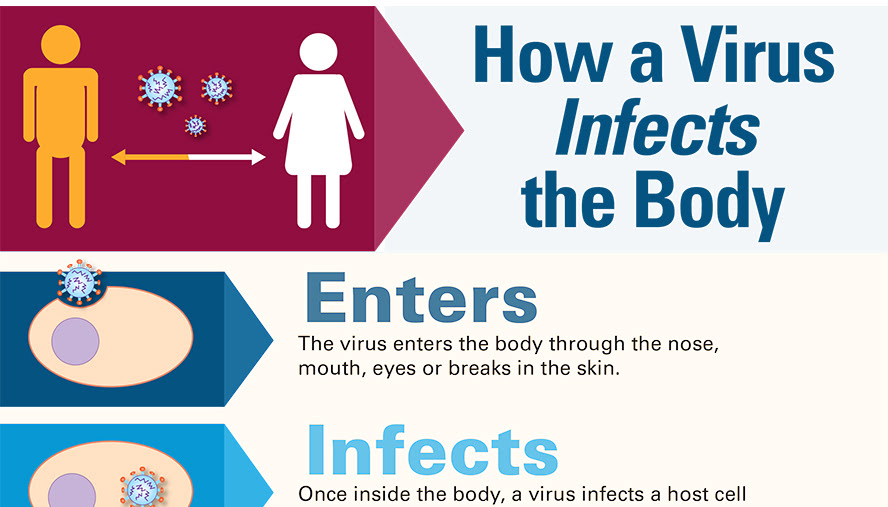 How a Virus Infects the Body