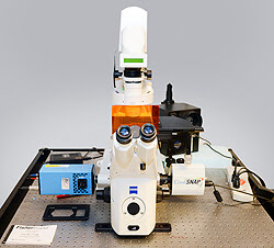 LWD Marianis Microscope
