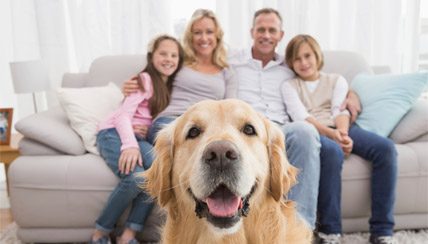 Healthy Homes: Reduce Pet Allergens