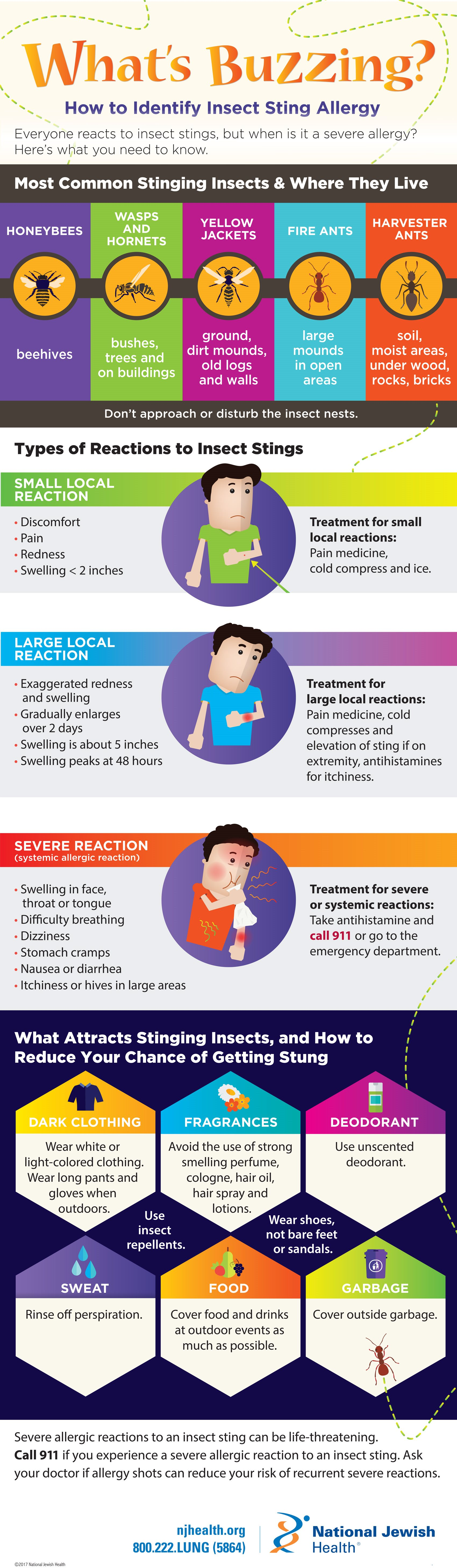 Insect Sting Allergy Infographic