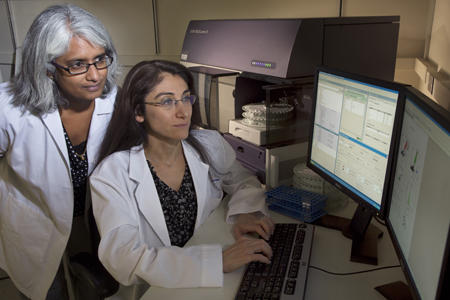 Milene Saavedra, MD (seated), and Vijaya Knight, MD, PhD, identify effective treatments for cystic fibrosis patients.