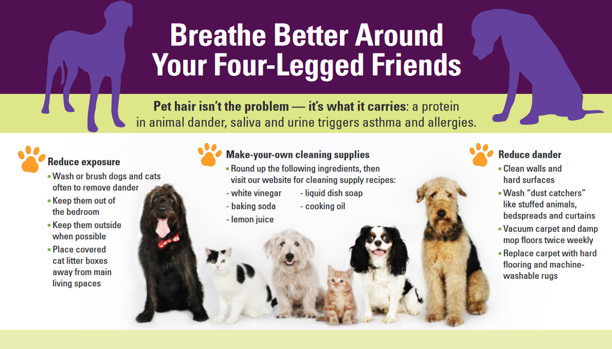 Can Dogs Have Allergies Or Asthma