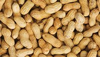 peanuts can cause allergic symptoms